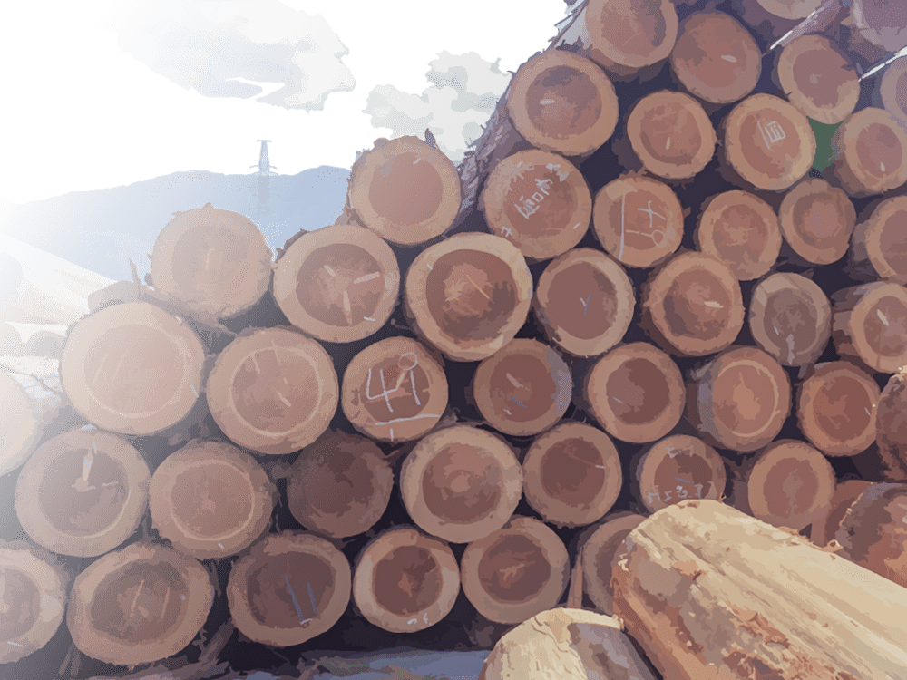 原木で積み上げられた耳納杉