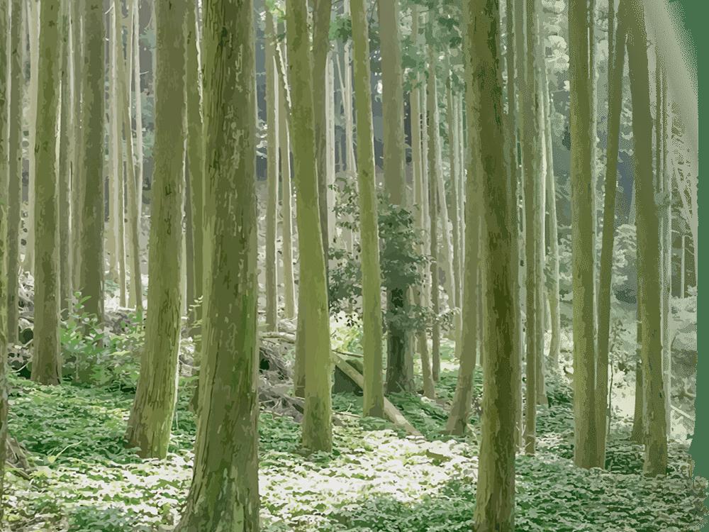 耳納杉の森林